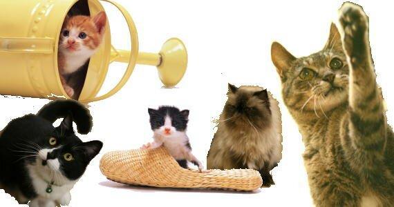 猫画像いろいろ KOMOWEB.com ネコのページ